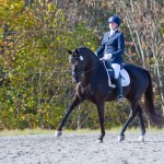 Fender, one of Lauren Sprieser's dressage horses