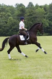 Fender, one of Lauren Sprieser's dressage horses